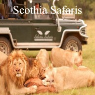 Schotia Safaris Day Tour